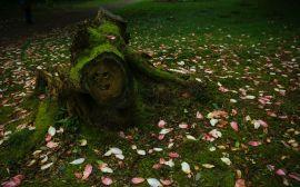 Fota House & Gardens, Magnolia
